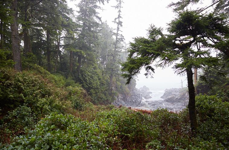 Forest Fog  Tofino Ucluelet British Columbia