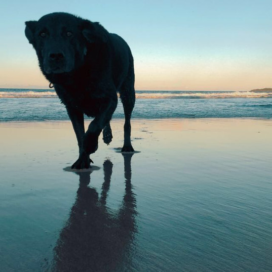 Jetta dog at the beach - Melanie Stephen