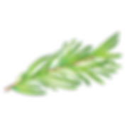 herbes1_icon_edited.png