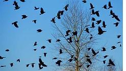 Buckner Custom Calls Crow Calls, Michael Buckner, Chris Buckner, Casey Buckner, Lauren Buckner