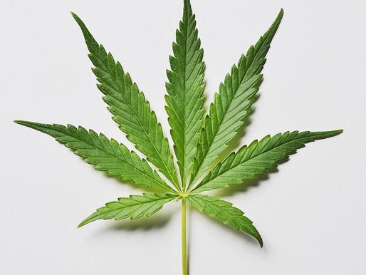 A look at legal marijuana