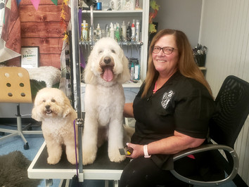 10 years for Hollywood Dog Salon