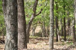 Camp Bartle Forest