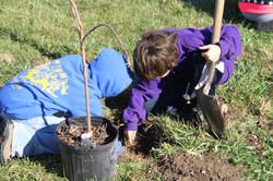 Tree Planting at Wallace Park 2014
