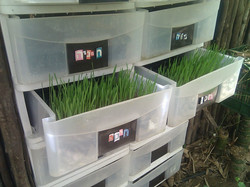 Drawers for germination