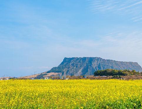 Jeju Island2.jpg