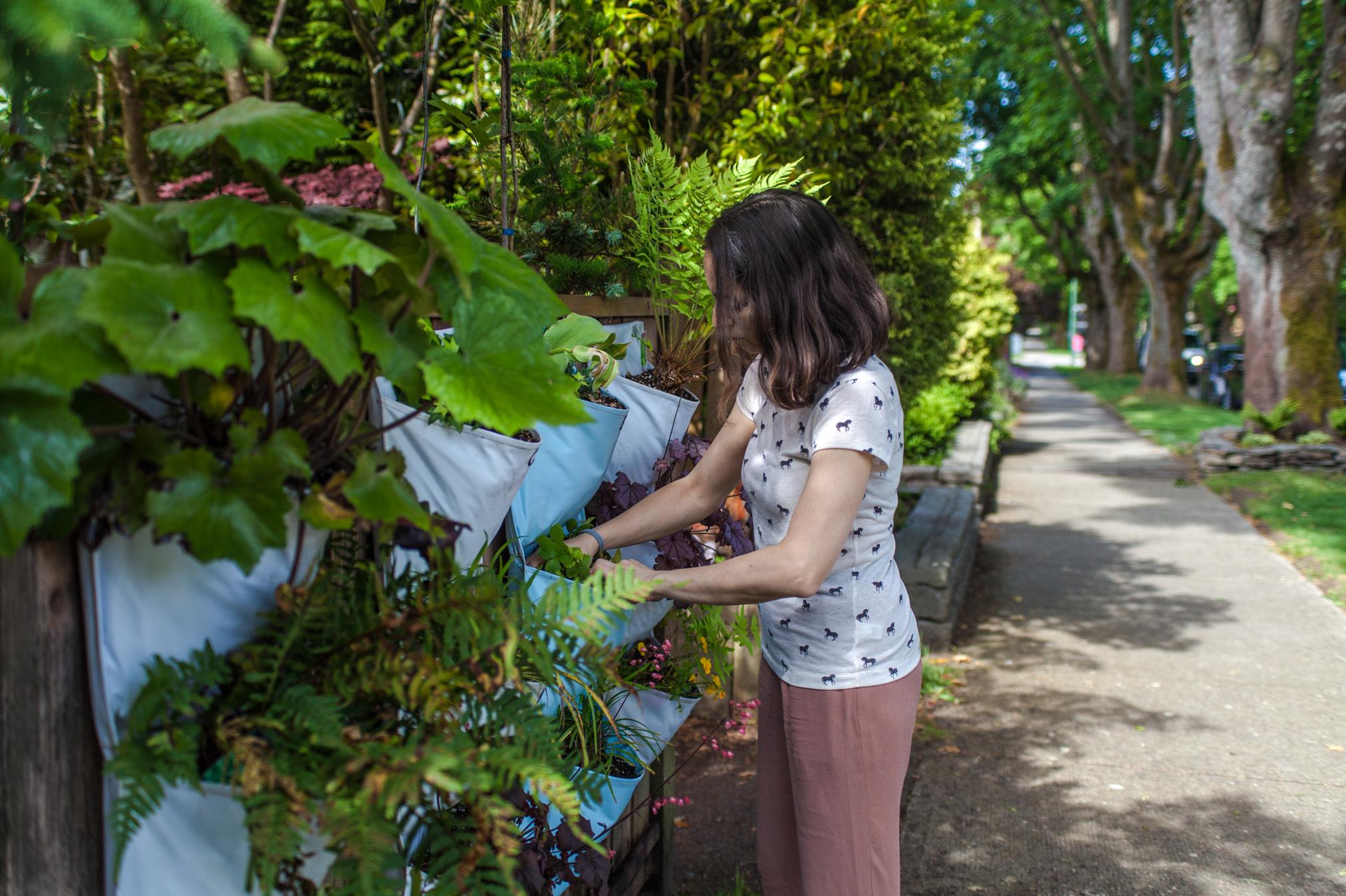 Residential Fence Garden