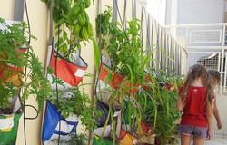 Educational herb garden