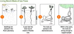 Treenovations Method.png