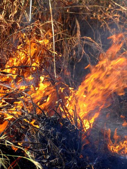 Cinzas deixadas pelos incêndios no Pantanal ameaçam ribeirinhos