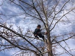2nd gen. arborist