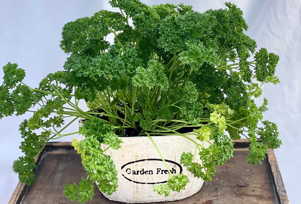 "Herb Gardens (7"")"