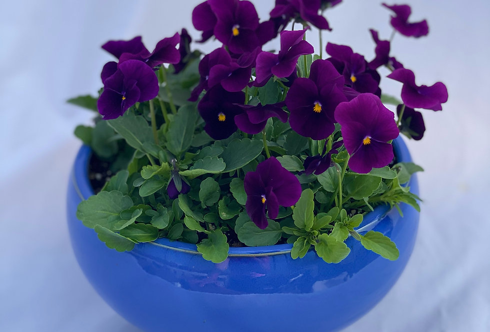 "Pansy Bowls (8"" Ceramic)"