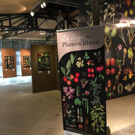 La Saga des plantes libres Muséum Départemental du Var