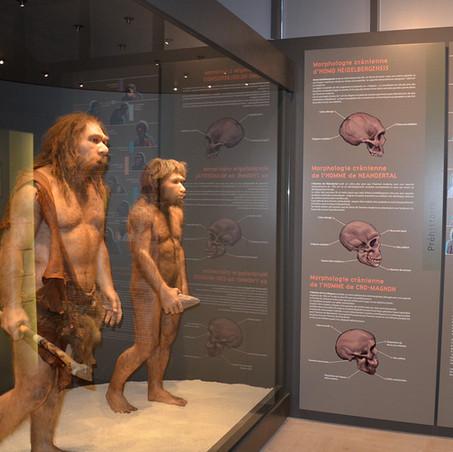Muséum Départemental du Var