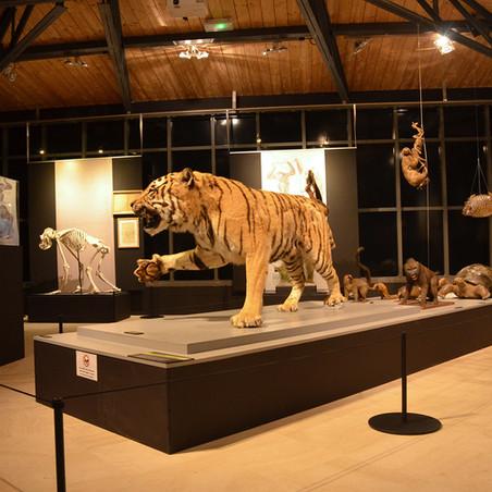 130 ans de découvertes Muséum Départemental du Var