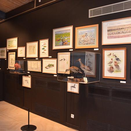 Le Dessin naturaliste Muséum Départemental du Var
