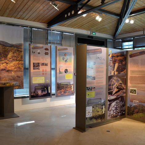 La Tortue d'Hermann Muséum Départemental du Var