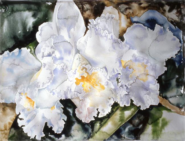 Three White Cattleyas Orchids 11x15