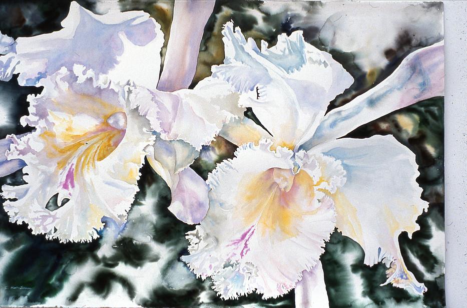 Irenes Orchids 40x60