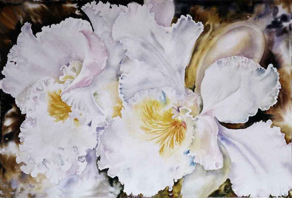 Cattleya Orchids with Brown Background