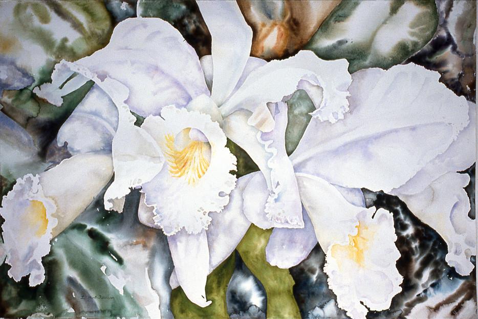 Three White Cattylas 40 x60