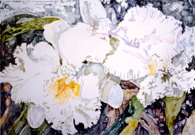 Watercolor Mono Print White Orchids 20x30