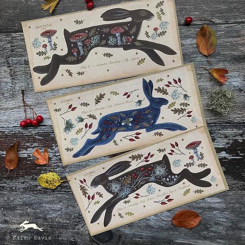 Autumn Hare/Flora/Fauna Nature Postcards x6