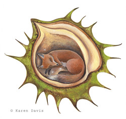 Fox Chestnut