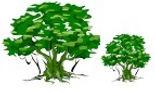 Trees logo.jpg
