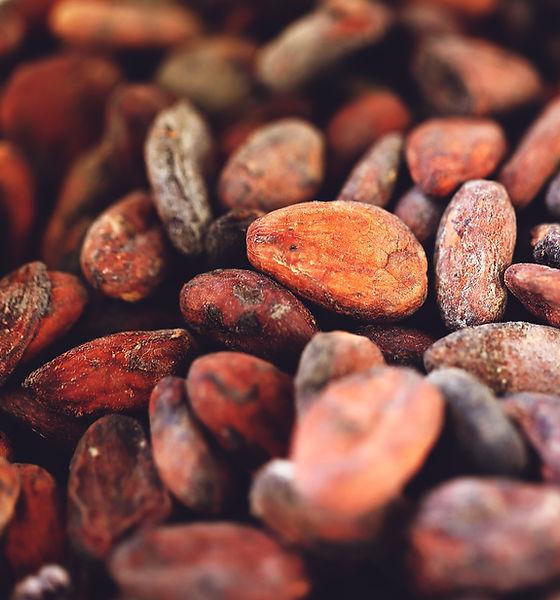 feve de cacao.jpg