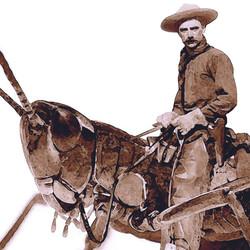 sauterelle_cowboy_détail_NET