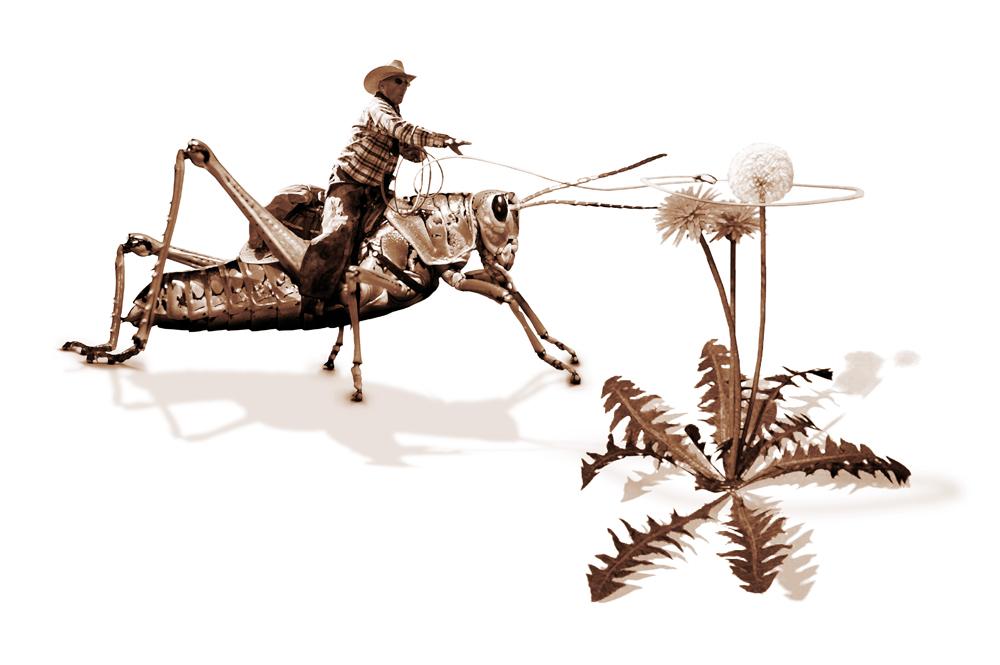 grasshopperboy III 72dpi NET