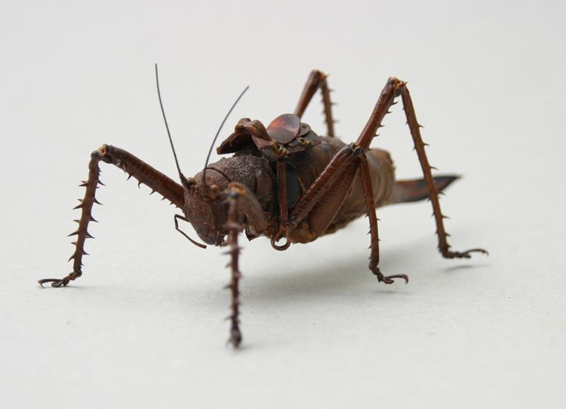 Grasshopper boy III (3D)
