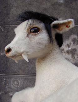 agneau3 NWS