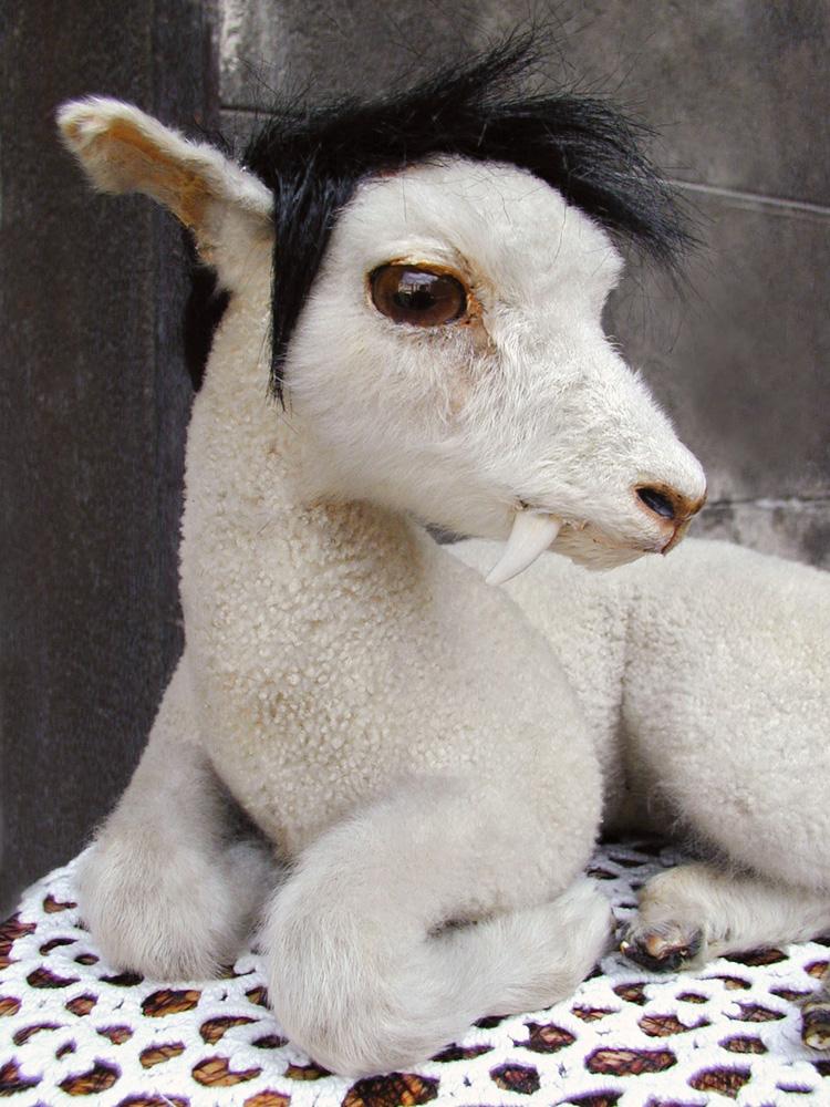 agneau2 NWS