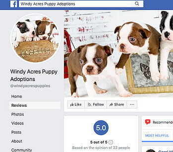 Facebook Page Photo of Windy Acres Puppies.jpg