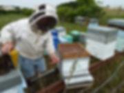 38-ruche-fuligule_19_2013-07-05_11-07-39