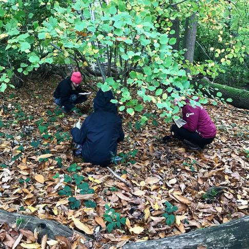 Surveying hazel trees