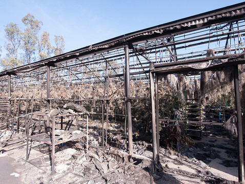 FROM THE EDITOR: Lilac Fire Destroys Local Nursery