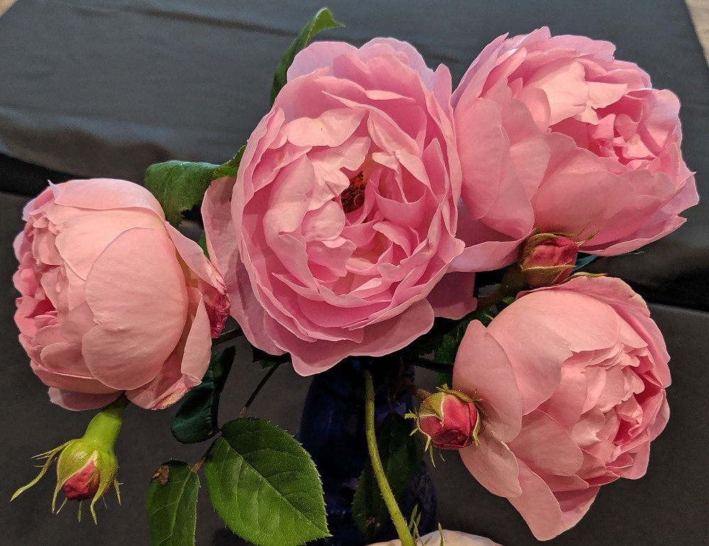 Pink Roses at the May Meeting.