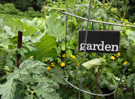 MEETING REPORT: Gardening Has NOT Been Canceled