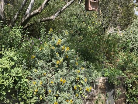 NEWS: Gottlieb Native Garden Tour