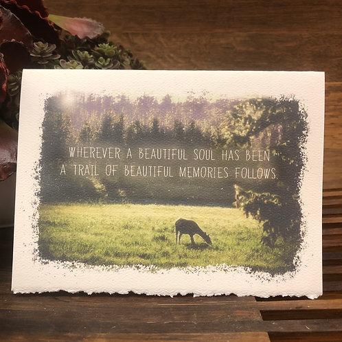 A Trail of Beautiful Memories