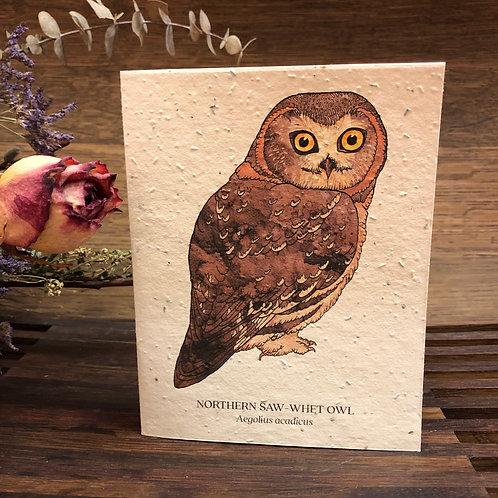 Plantable Owl Card
