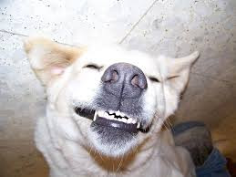 GUMS!!! The Windows to your Dog's Health?