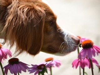 The Wonder of Herbs for Dogs