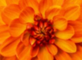 orange flower close up.jpg