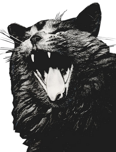 cat%20yawn_no%20background_edited.png