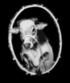 Flair photos - Cow.png